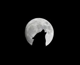 Collaborative Recruiting V's The Lone Wolf Recruiter